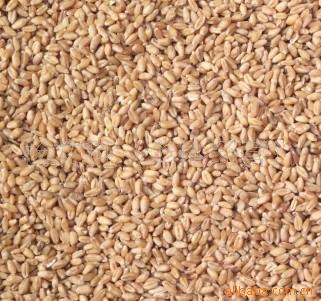 供优质.小麦