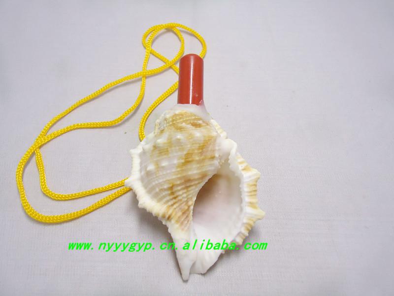 应纯天然海螺 贝壳手工艺品系列 海生海螺螺号 儿童喜爱玩具图片,图片