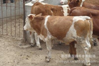 重庆肉牛养殖400-678-3857本厂常年供应