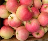 陕西嘎啦苹果价格渭南嘎啦苹果大荔嘎啦苹果市场批发