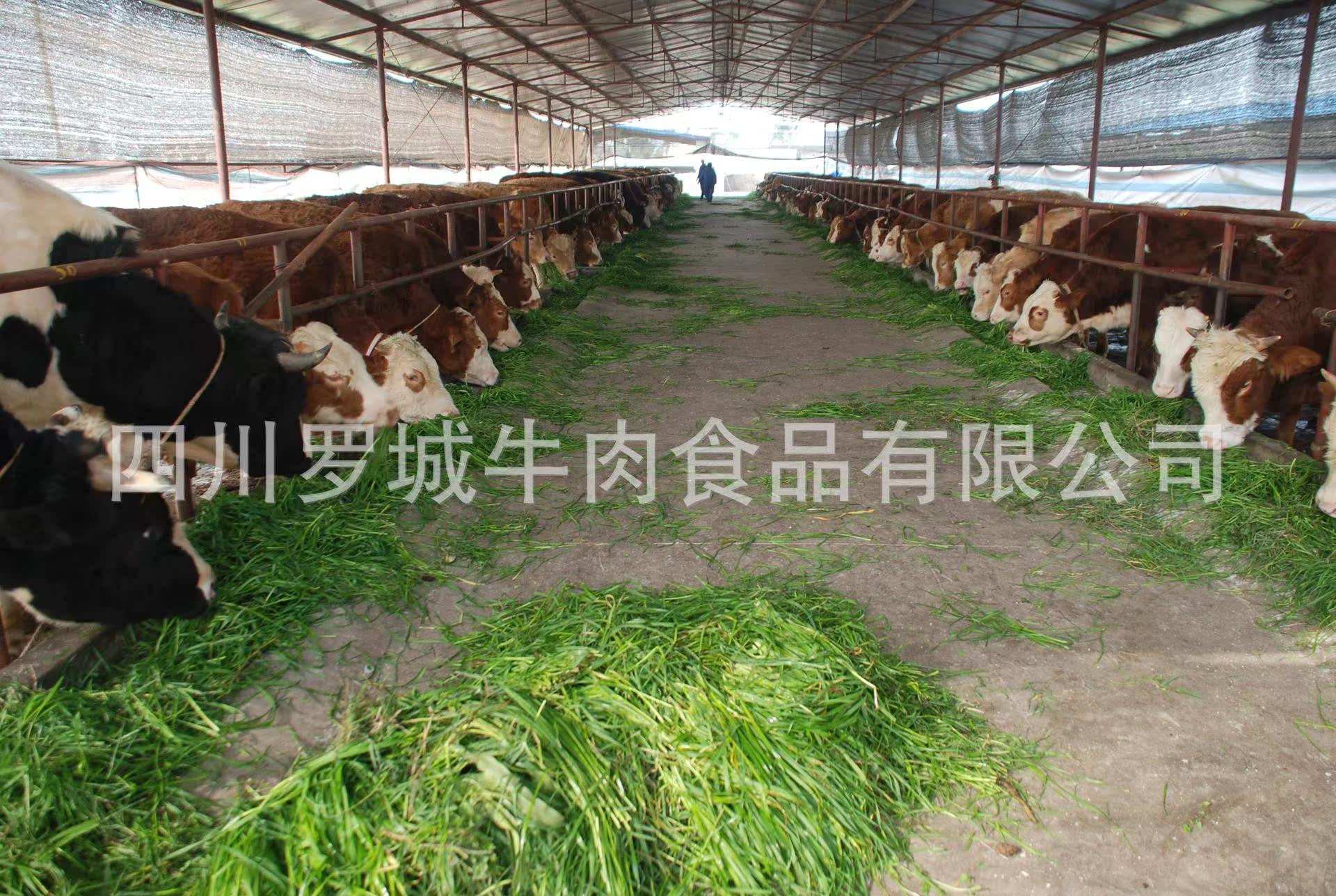 基地-养殖基地