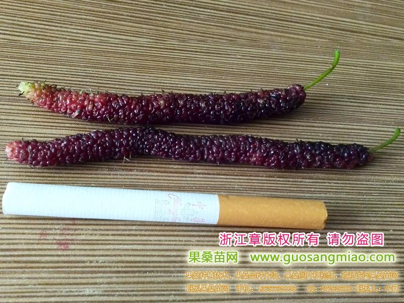 长果桑和香烟对比