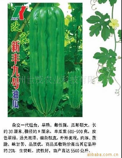 供应改良新丰九号油瓜种子(价格和货量需面议)